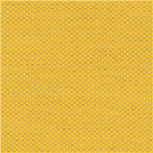 Pergola - Daffodil